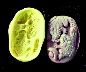 Frogs - Cake Candy Cookies Crafts-  Silicone Mold