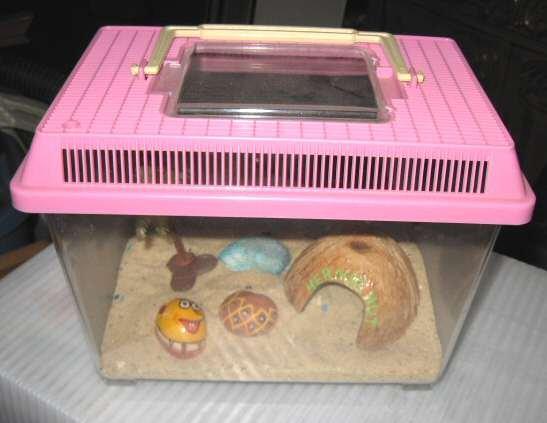 Small Portable Aquarium Tank Fish Beta Crab Turtle