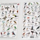 BIRDS OF COSTA RICA Field Guides Laminate 8 x 12 rigid cards.