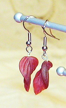 Burgundy Leaf Earrings