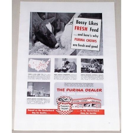 1951 Purina Chows Cow Color Print Ad - Bossy Likes Fresh Feed