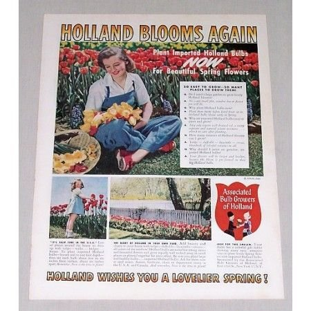 1945 Bulb Growers Of Holland Color Print Ad - Holland Blooms