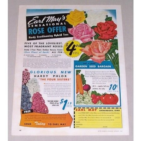 1945 Earl May's Sensational Rose Offer Color Print Ad