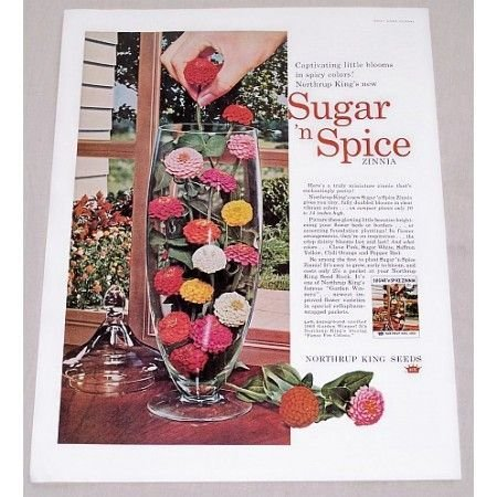 1960 Northup King Seeds Sugar Spice Zinnias Color Print Ad