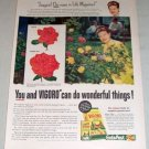 1954 Vigoro Plant Food Roses Color Print Ad Mrs. Kinkaid