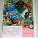 1953 Canada Dry Ginger Ale Pedigree Pups Dogs Art Color Print Ad