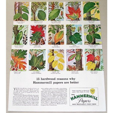1957 Hammermill Papers Color Print Ad Hardwood Trees