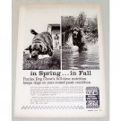 1965 Purina Dog Chow Vintage Print Ad - In Spring...In Fall