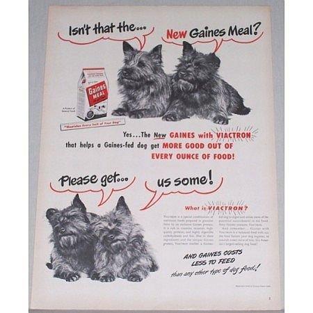 1948 Gaines Meal Dog Food Vintage Print Ad