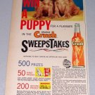 1961 Orange Crush Puppy Sweepstakes Color Beverage Print Ad