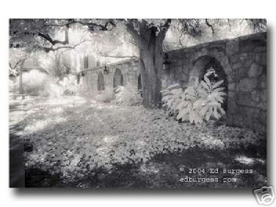 Alamo CourtyardTexas Infrared Fine Art Photo Landscape Trees