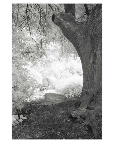 """Enlightenment #7"" Fantasy Austin Texas Zilker Park Infrared Landscape Garden Fine Art Photo"