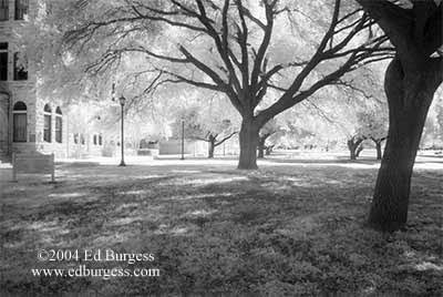 """Southwestern University Live Oaks #3"" Infrared Photo Southwestern University Trees fine art"