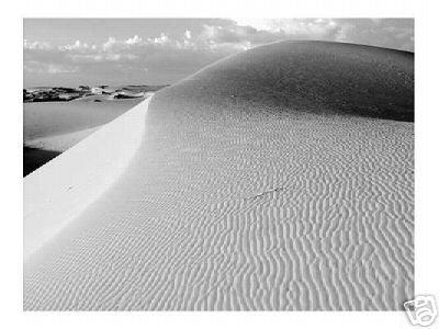 """Monahans Sandhills"" Monahans Sandhills Dunes Landscape Fine Art Photo Desert Ed Burgess"