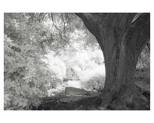 """Bright Hollow"" Infrared Austin Texas Trees Landscape Fine Art Photo Eddie L Burgess"