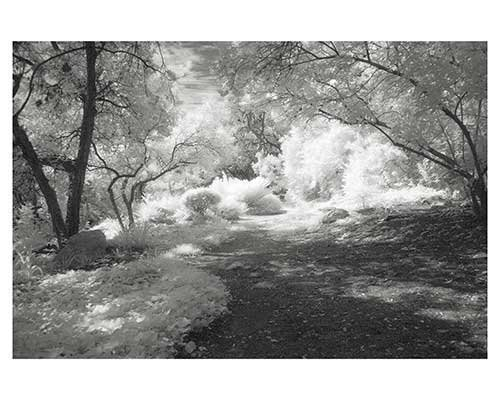 Fantasy Austin Infrared Landscape Garden Fine Art Photo by Ed Burgess