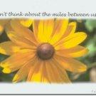 #M4U0386 Sunflower Across the Miles Greeting Card