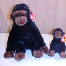 TY CONGO THE MONKEY BEANIE BABY BUDDY SET