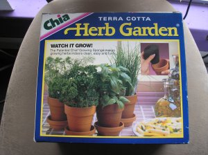 Chia terra cotta herb garden curled parsley dill chives