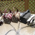 Coach Top Handle Pouch Bags-LOT OF 5-GUARANTEED 100% AUTHENTIC-SHEARLING/HAMPTONS/ERGO SCARF!