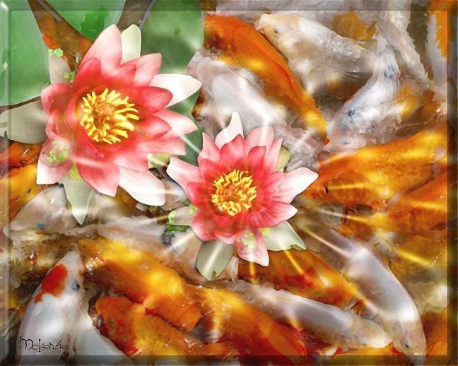 KOI WITH ORANGE LOTUS FLOWERS