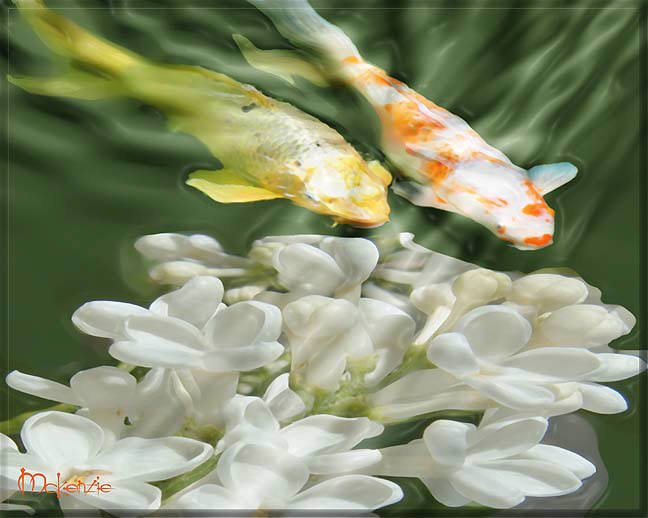 KOI WITH WHITE BLOSSOMS
