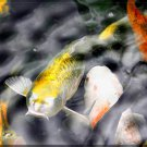 Japanese ART Yellow Koi fish Pond Feng shui PAINTING