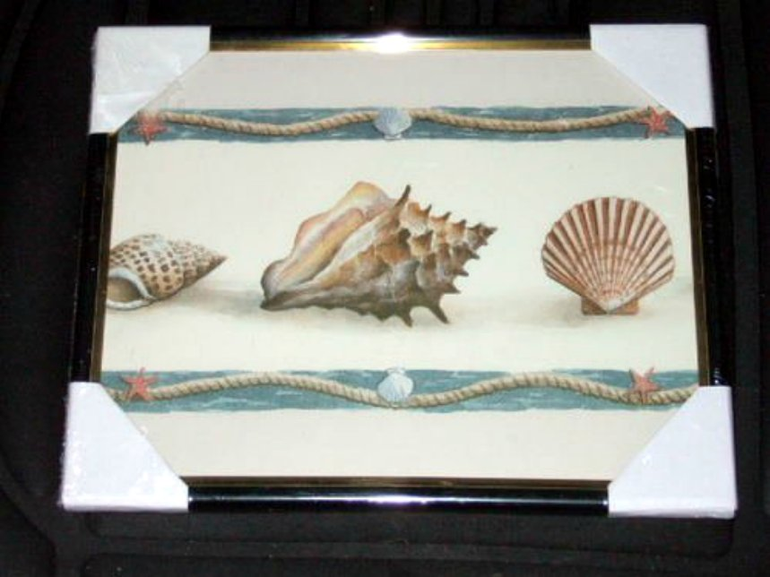 Nautical Seashells Framed Print Picture Wall Decor