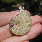 925 Silver African Ammonite fossil pendant necklace dinosaur era  Amber color A