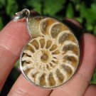 Africa Ammonite Fossil necklace pendant thailand jewelry art A8