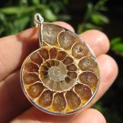 Africa Ammonite Fossil necklace pendant thailand jewelry art A18