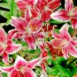 Skibo Flowers - 19 x 30
