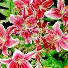 Skibo Flowers - 14 x 22