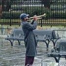 Serenading Katrina - 11 x 17