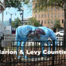 List Properties For Sale Located in Marion or Levy County