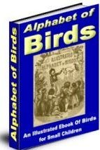 Alaphabet of birds