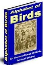 Alaphabet of birds