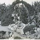 Real Photo, RPPC, Section of Pirtle's Catus Garden, Edinburg, Tex. b/w