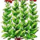 Henna Seeds