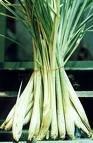 Lemon Grass Seeds