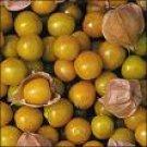 Tomatillo Seeds/Pineapple