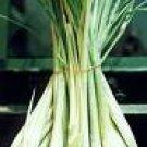 Lemon Grass - Dried