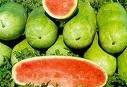 Charleston Grey Watermelon