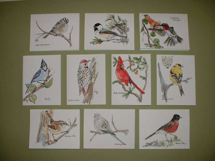 NOTECARDS  BACKYARD BIRDS by Maren Phillips