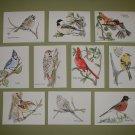 NOTECARDS  BACKYARD BIRDS by Maren Phillips