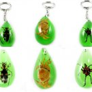Wholesale Lot 6 Insect Bug Oval Green Key Chain Keyring