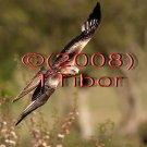 Falcon*01*