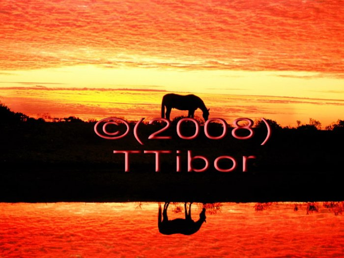 Horse*06*