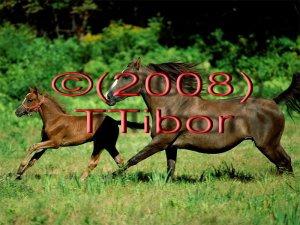 Horses*04*