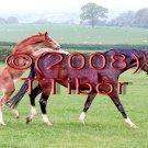 Horses*02*